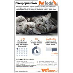 pet overpopulation infographic